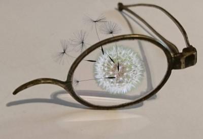 dandelion_glasses